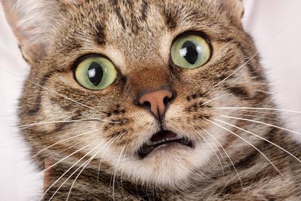 cat_shock.jpg